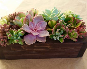 "9"" SUCCULENT planter box, centerpiece, Mother's Day, gift, wedding"
