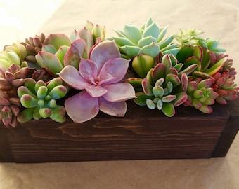 "9"" SUCCULENT planter box, centerpiece, Mother's Day, gift, wedding"