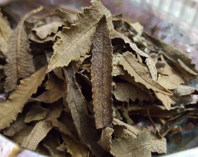 Loose Yerba Santa (Eriodictyon Californicum) aka Holy Herb, Mountain Balm, Consumptive's Weed, Bear Weed ~ 3/4 ounce package, Reiki infused