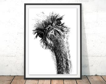 Ostrich Print, Ostrich Wall Art, Ostrich Illustration, Ostrich Art Print Wall Hanging, Bird Print, Bird Illustration, with Frame by Bex
