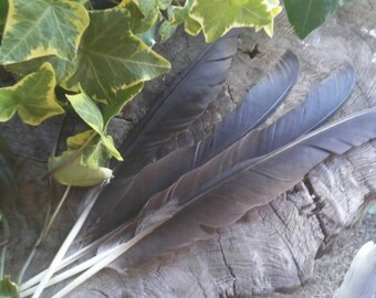 Four Crow Feathers - Smudge Feathers - Hair Feathers - Feathers for Hats - Feathers for Crafts