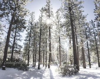 Winter Woodland Snow Art | Forest Sunlight Photo | Forest Snow Print | Winter Nature Photo | National Forest | Big Bear Lake  California Art