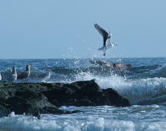 A wonderful picture of a seagull taking flight off of the jetty.