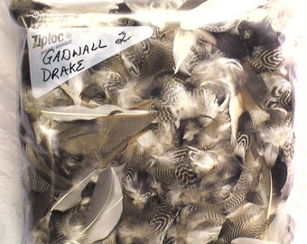 Bag of (2) Gadwall/Gray Duck Drake Feathers For Fly Tying - Mature and Beautiful Feathers