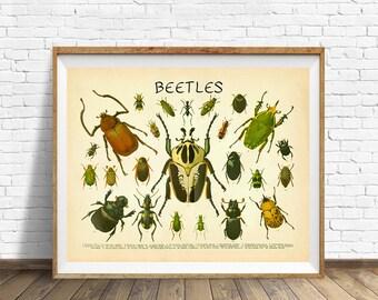 Vintage Insect Poster, Beetle Print, Vintage Beetle Poster, Beetle Chart, Insect Chart Wall Art Home Decor #vi523