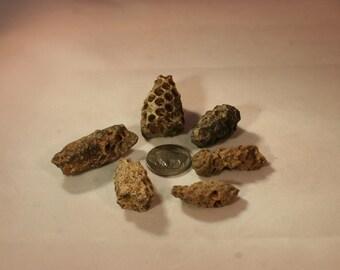 Agatized Pine Cones # 640C