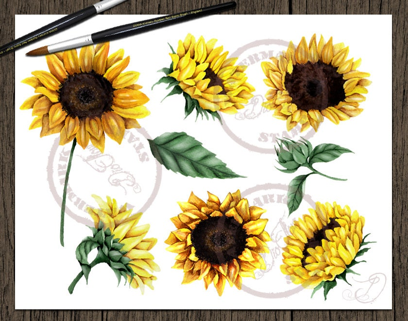 Watercolor Sunflower Clipart Clip Art Summer Sun Flower ...