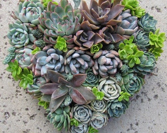 Creative decor succulent heart shape dried sphagnum moss wreath/planters