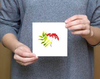 Sorbus aucuparia postcard