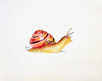 Snail colored pencil drawing ORIGINAL