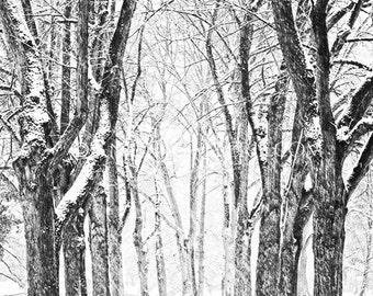 Winter Portrait: Mid-Winter Wisconsin