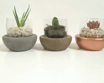 Glass and concrete Terrarium Kit for Succulents/airplants