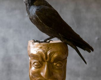 Taxidermy gothic, wiccan Jackdaw on a Bronzed Gargoyle