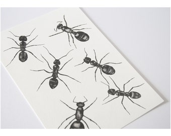 ORIGINAL black pointillism ant specimens, science illustration, creepy crawlies, insect ink drawing, bug illustrations, black and white dots
