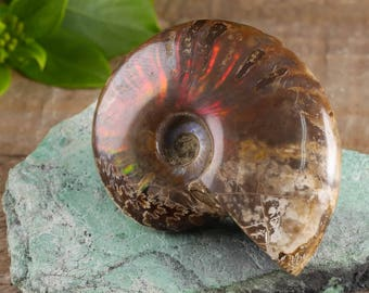 One Medium Rainbow Opalized AMMONITE Fossil - Ammonite Jewelry Making, Ammonite Pendant, Ammonite Cabochon, Fossil Jewelry E0423