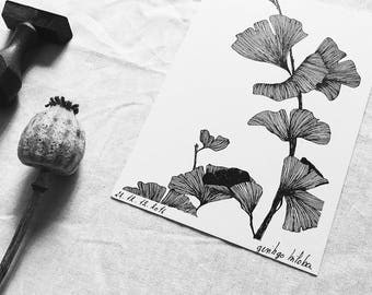 Illustrated Gingko Biloba - Postcard - Drawing by hand - numbered and limited drawing - tree with dance colors - monocotylédone