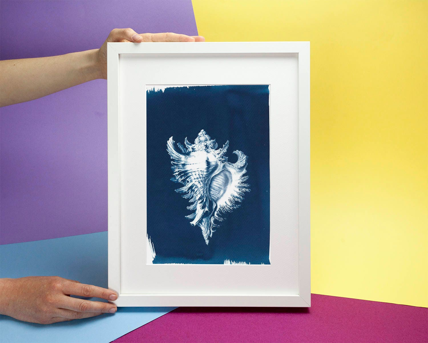 Conch Shell Drawing by Ernst Haeckel, Cyanotype Print on ...