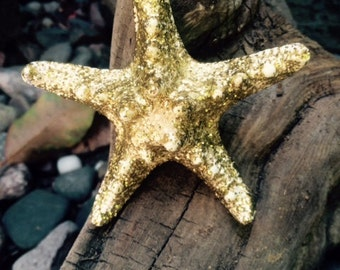 Sparkly gold knobby starfish hair clip