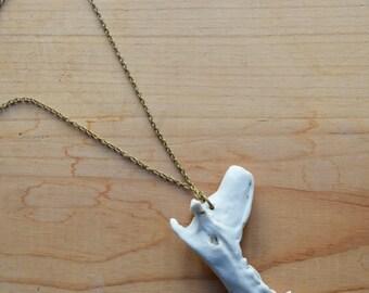 Jawbone Necklace, Raccoon