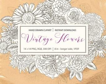 Vintage Flower ClipArt,Hand drawn flowers,Blossom,Camellia,Rose,vintage wedding,floral Clip art,hydrangea,doodles flowers,digital PNG