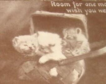 Vintage RPPC of Kittens In A Basket