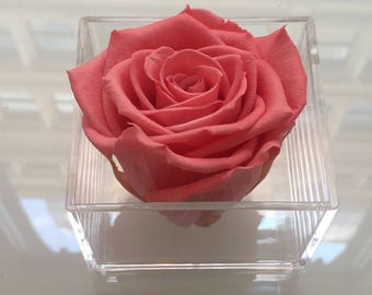 Single Eternity Rose in a Lucite Box