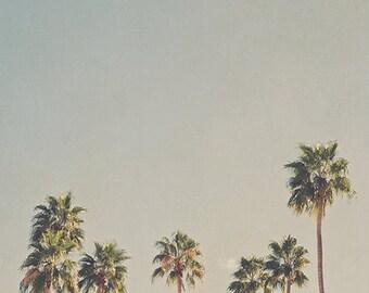 Palm Springs photograph, Palm trees print, California wall decor, tropical decor, desert photography, Coachella Valley art, green, blue art