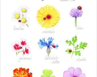 Plants Ladybugs Love Art Print by SBMathieu