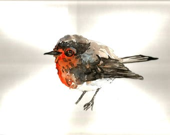 "Art Original Watercolor Animals Pets  "" Robin"""