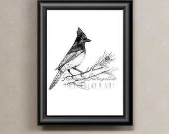 Scrub Jay illustration- Giclee Fine Art Print - Pen and Ink Illustration - Scrub Jay Drawing - Artist Rachael Caringella