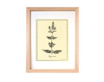 stampa botanica menta piperita su carta pergamena arredo pareti decorazioni parete stampe botaniche