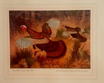 Vintage Gobbler Turkey Lithograph Lynn Bouge Hunt Colored Turkey Print Titled King Gobbler  Bird Lithograph Gobbler With Hen Rustic Decor