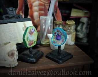 EUKARYOTIC CELLS . Antique educational model of animal and plant cell. Science study miniature for dollhouses 1:12  scale