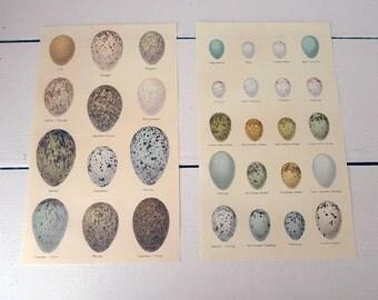 Set of Two Egg Prints