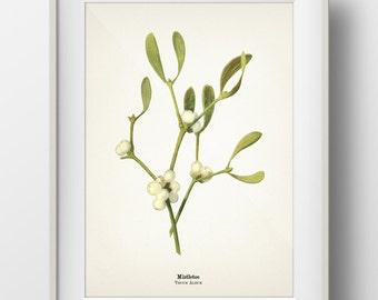 Mistletoe Plant Christmas Botanical Print - Holiday Wall Art - INCLUDES plant name on print - PL-05