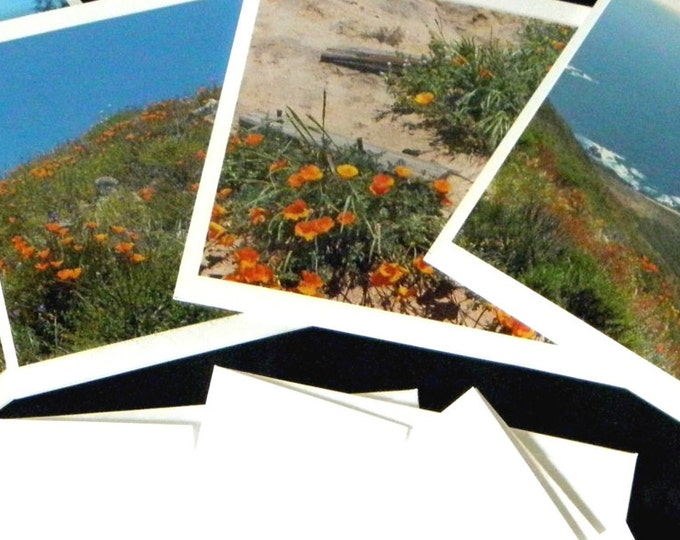 POPPIES ON PARADE 4-piece photo Note Card Set from Pam's Fab Photo, includes coordinating envelopes