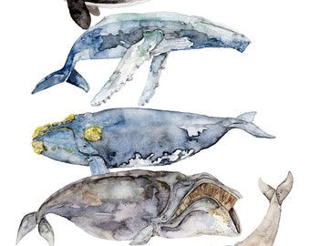 "5 Whales Painting - Print titled, ""Whale Species"", Whale Art, Watercolor, Whale Painting, Orca, Humpback Whale, Nautical, Beach Decor, Whale"