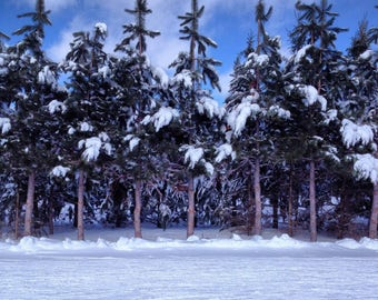 Winter Snowy Forest Instagram Photography Art Print