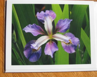 Stunning purple iris photo note card