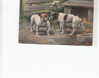 Undivided Back Antique Unused Postcard Two Fine Old Bulldogs Hanging Around Farmyard