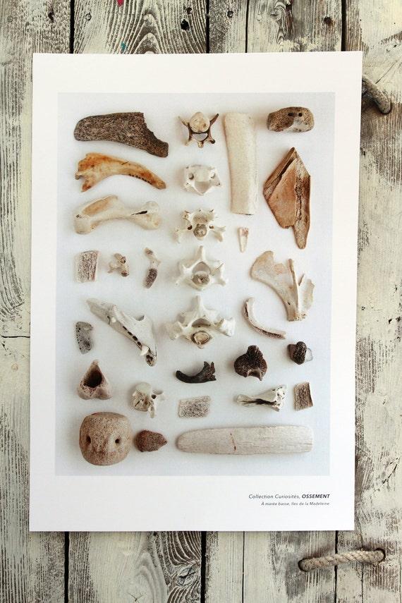 "Naturalist poster  BONES - 13"" x 19"""