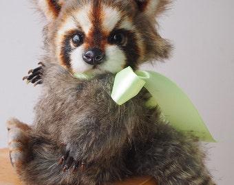 Raccoon Teddy Pusey