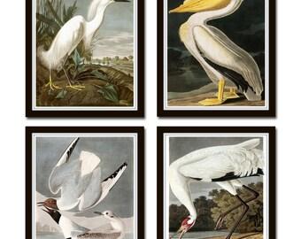 Vintage Audubon Sea Birds Print  Set No. 5, Giclee, Bird Prints, Prints and Posters, Art Print, Coastal Art, Audubon Bird Prints, Collage