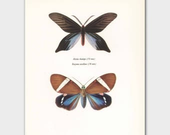 "Butterfly Print (Boho Decor Wall Art, Vintage Natural History Book Plate) -- ""Hope Butterflies"" No. 86-2"
