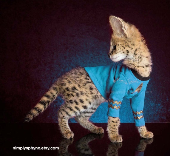 eskort sto cat suit