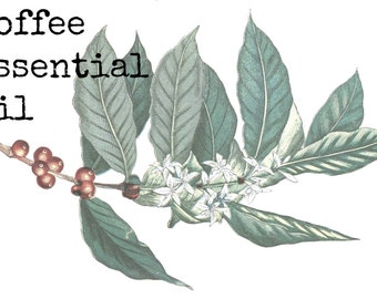 Coffee Essential Oil | Coffee Oil | Pure Essential Oils | Aromatherapy Oil | Natural Cologne
