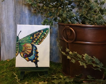 Green Winged Butterfly