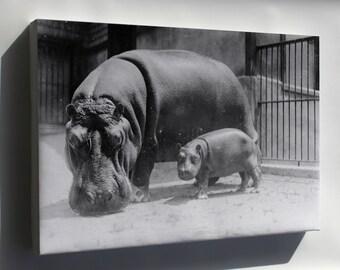 Canvas 24x36; Hippopotamus At The National Zoo, Washington, D.C. 3C20511U Original