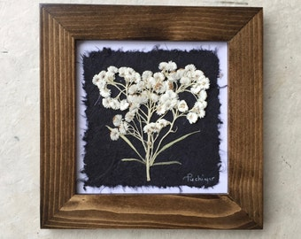 Pressed Pearly Everlasting Picture. Available in Black and Walnut Frame.