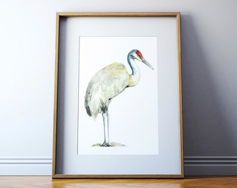 Sandhill Crane Watercolor Art Print - Sandhill Crane Bird Painting